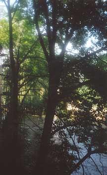 River Park - more Nature