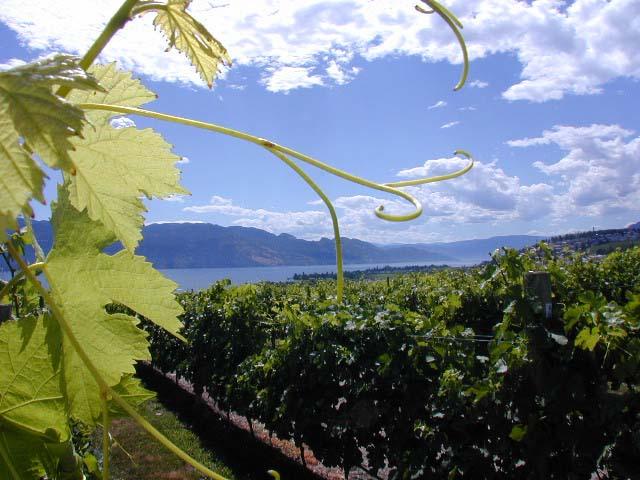Kelowna Wine Country